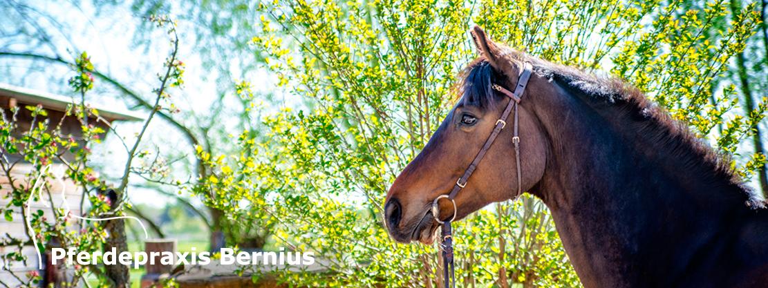 Pferdepraxis Bernius