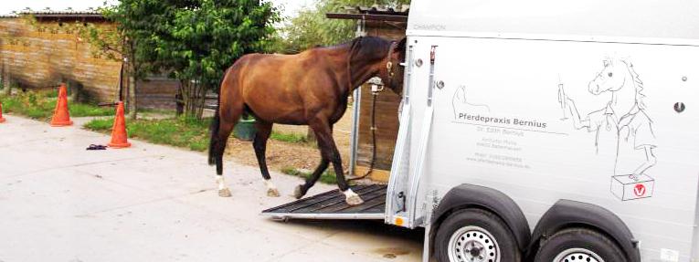Halotherapie für Pferde, Salzhänger, Inhalation Pferd